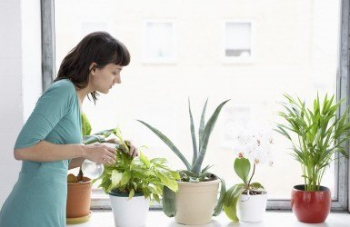 How-to-Transition-Tropicals-Indoors