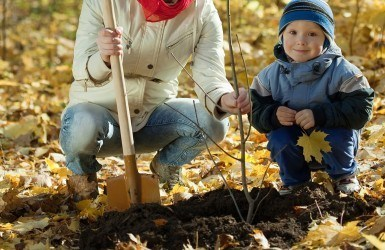 What-You-Need-to-Know-about-Fall-Planting