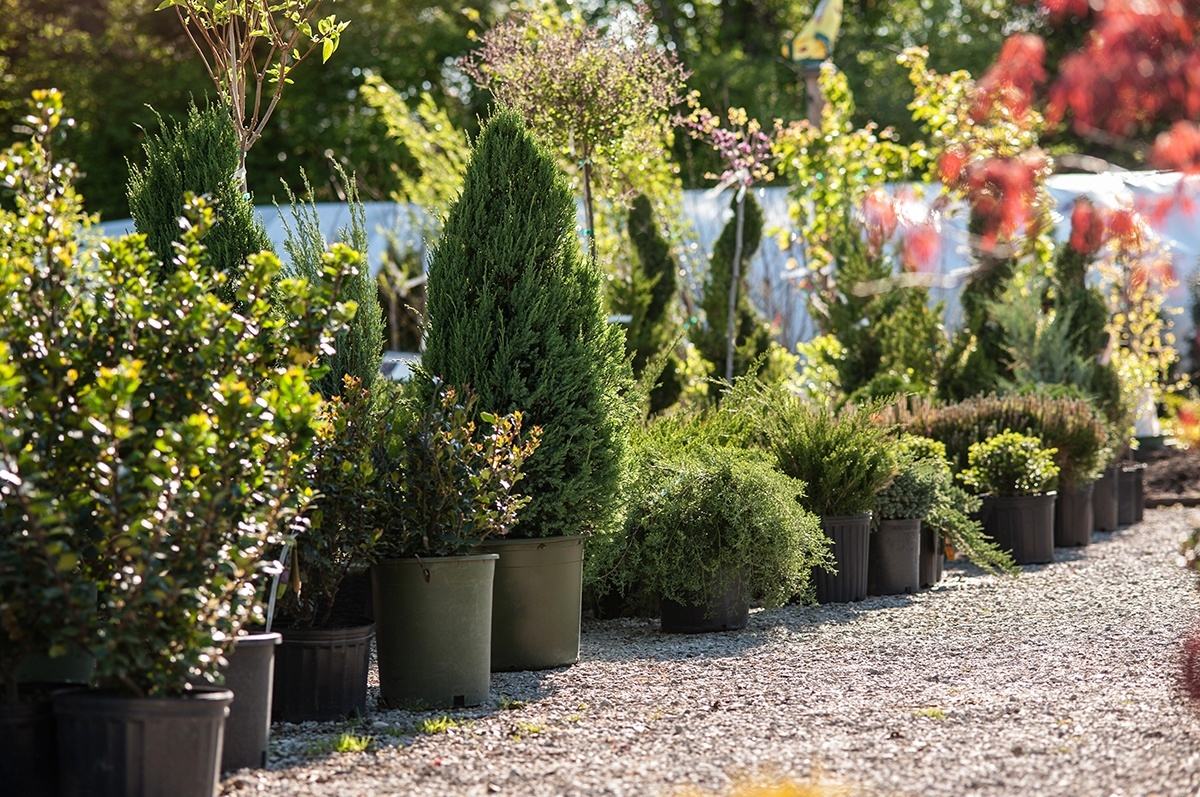 Garden Centre: White Oak Gardens