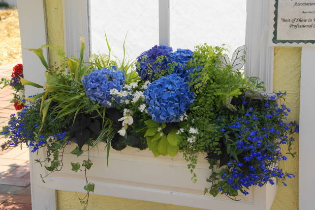 "2009 - ""Best of Show - Window Boxes""  Designer Anita Comarata ""Blue Berries and Cream"""