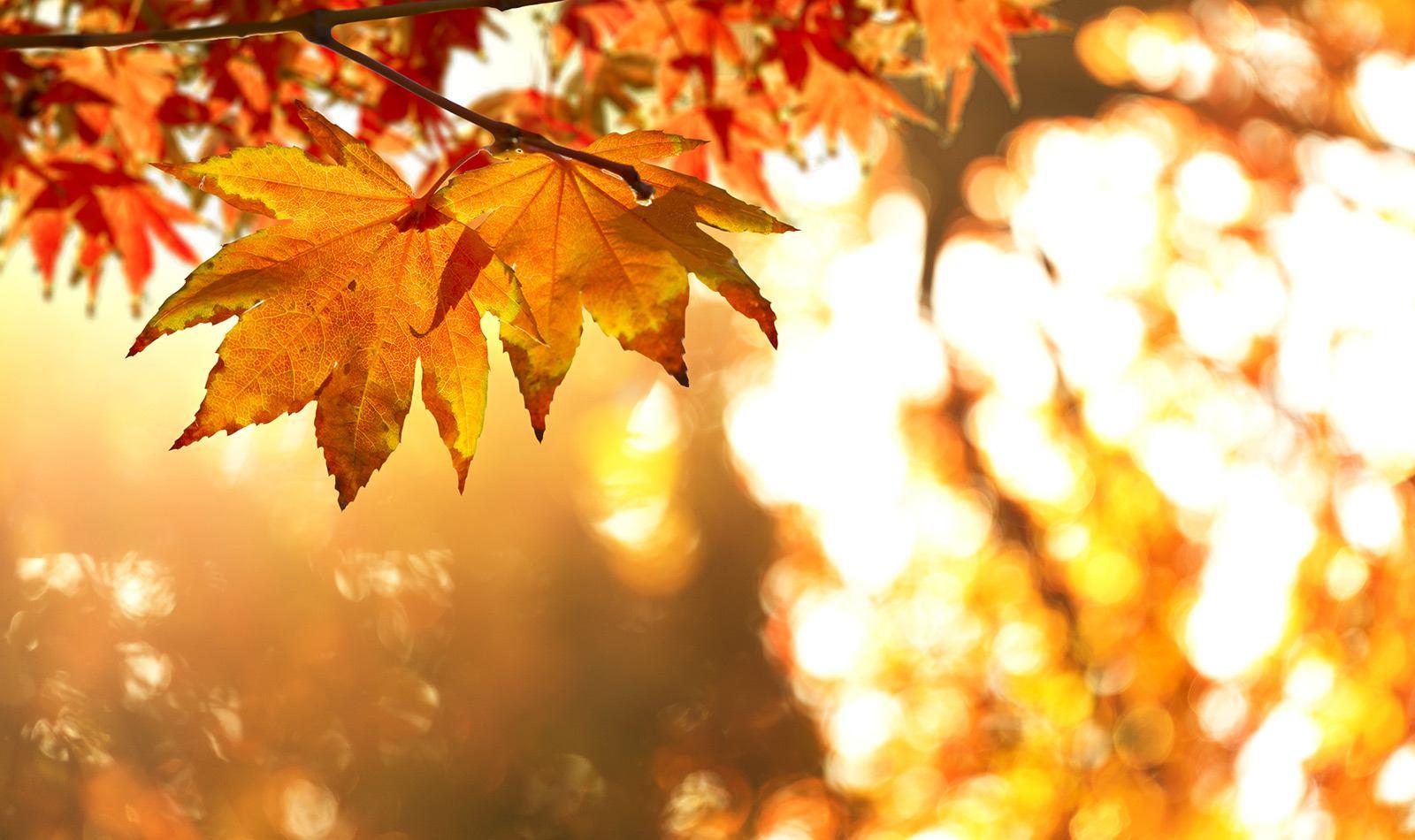 Top 5 Trees For Fall Color White Oak Gardens Cincinnati Oh
