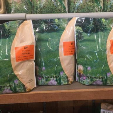 White Oak Fescue Grass Seed Mix