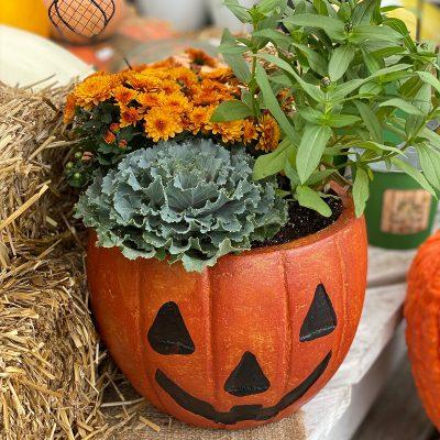 White Oak Jack-O-Lantern Planter Make & Take