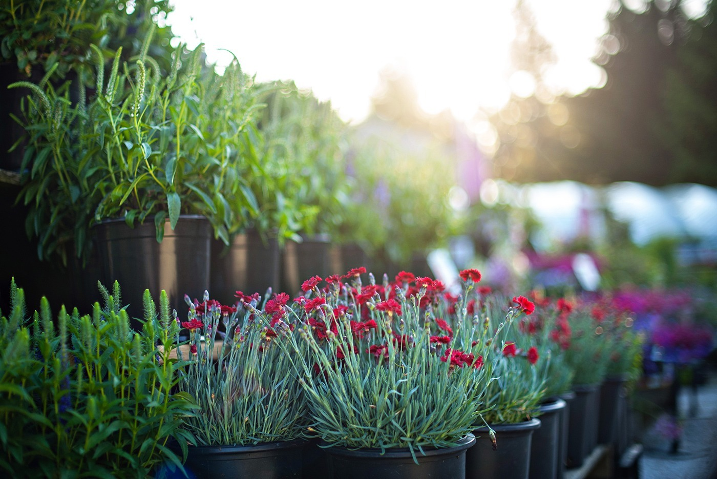 contact us directions white oak gardens cincinnati oh - White Oak Garden Center